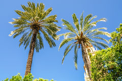 Two palm trees with a church in the backgound Stock Images