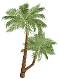 Two Palm Trees. Two colorful palm trees illustration on white background Stock Image
