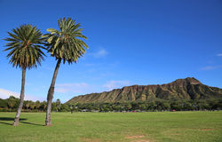 Two palm trees and Diamond Head Stock Image