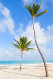 Two palm trees on empty beach with white sand Royalty Free Stock Photography