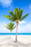 Two palm trees grow on empty sandy beach Royalty Free Stock Photos