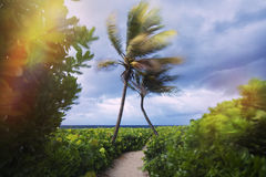 Two palm trees hugging each other at the beach Stock Photos