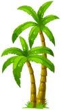 Two palm trees Stock Photos