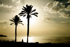 Two palm trees in a Mediterranean beach Royalty Free Stock Images