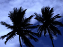Two palm trees at midnight. In a thunderstorm on the caribbean island tobago Royalty Free Stock Image