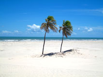 Two Palm Trees On A White Sandy Beach Royalty Free Stock Images