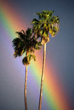 Two palm trees with rainbow Stock Photos
