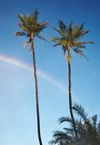 Two palm trees and rainbow Stock Images