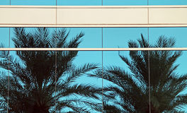 Two Palm Trees Reflected in a Skyscraper Royalty Free Stock Image