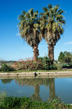 Two Palm Trees Reflected in Water of Irrigation Channel. Royalty Free Stock Photos