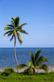 Two palm trees by the sea. A sea view between a small and a tall palm trees Stock Photography