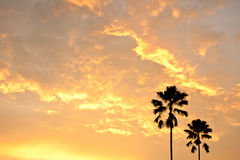 Two palm trees silhouette. Beautiful sunset with two palm trees silhouette Royalty Free Stock Photography