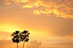 Two palm trees silhouette. Beautiful sunset with two palm trees silhouette Stock Photography