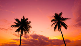 Two palm trees silhouette on sunset Royalty Free Stock Image