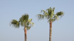 Two palm trees silhouette stock video