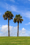 Two palm trees Royalty Free Stock Photography
