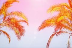 Two Palm Trees on Toned Purple Blue Pink Sky Background Golden Sun Flare. Frame Border Composition Copy Space. For Text. Tropical Foliage Vacation Ocean Beach Stock Photo