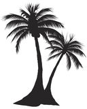 Two palm Royalty Free Stock Image