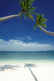 Two palms. View of nice tropical beach with some palms around royalty free stock photography