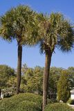 Two Palms. Two Palm trees against blue sky Royalty Free Stock Images
