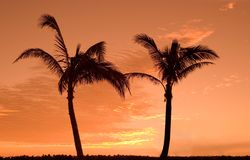 Two palms. Two palm trees at sunrise Stock Photos