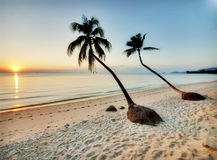 Two palms on a beach Royalty Free Stock Photo