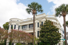 Two Palms and Magnolia at Southern Home Royalty Free Stock Photos