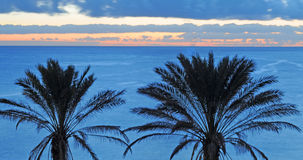 Two palms, ocean in background, Tenerife Stock Image