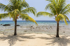 Two Palms. A pair of coconut palm trees on the beautiful sandy beach and coral reef at Lighthouse Point near the Meridian Resort in Roatan, Honduras Stock Photos