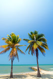 Two Palms Stock Images