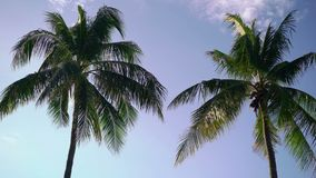 Two palms at sunny day stock footage