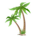 Two palms tree isolated Stock Photo
