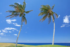 Two palms trees at the beach Stock Image