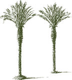Two palms Stock Photography