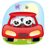 Two Pandas in a car Stock Images