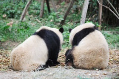 Two pandas Royalty Free Stock Photos