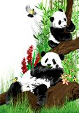 Two pandas relax on the tree. Stock Photography