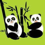 Two pandas sit in the woods and eat bamboo Stock Photos
