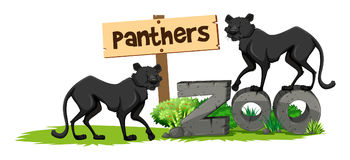Two panthers in the zoo Royalty Free Stock Images