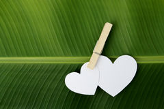 Two paper heart pinch by clip on banana leaf Royalty Free Stock Image
