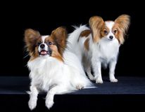 Two papillons Royalty Free Stock Photography