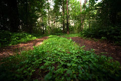 Two parallel paths Royalty Free Stock Image