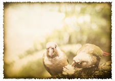 Two parrot on old burnt paper vintage style Royalty Free Stock Image