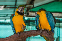 Two parrot are perched on a branch at the zoo Royalty Free Stock Photos