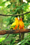 Two Parrots. A photo taken on a pair of colorful parrots in captivity royalty free stock photo