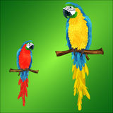 Two parrots ara macaw royalty free illustration