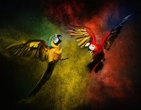 Two parrots fighting Royalty Free Stock Image
