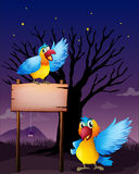 Two parrots near an empty board Royalty Free Stock Image