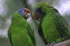 Two parrots posing. stock photos