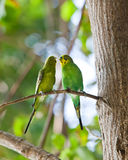 Two parrots sit on a tree in the wood Stock Photography